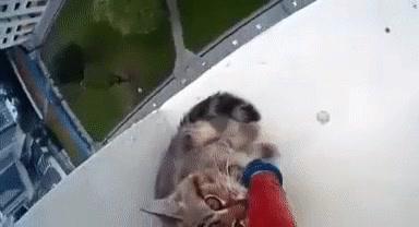 Enlace a Rescatando a un pobre gatito atrapado en un décimo piso