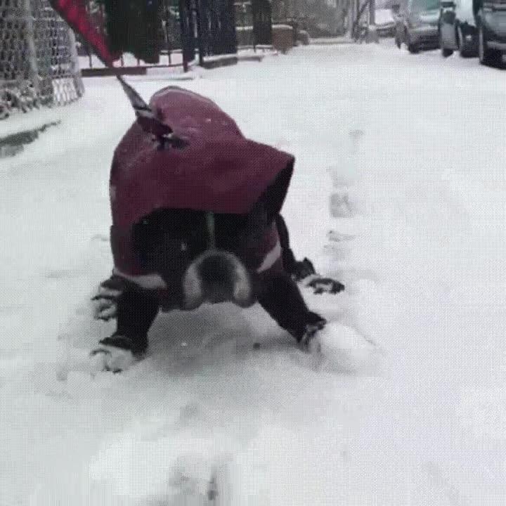Enlace a Tengo la ligera intuición que mi perro odia los paseos por la nieve