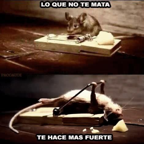 Enlace a Lecciones de la vida por una ratón