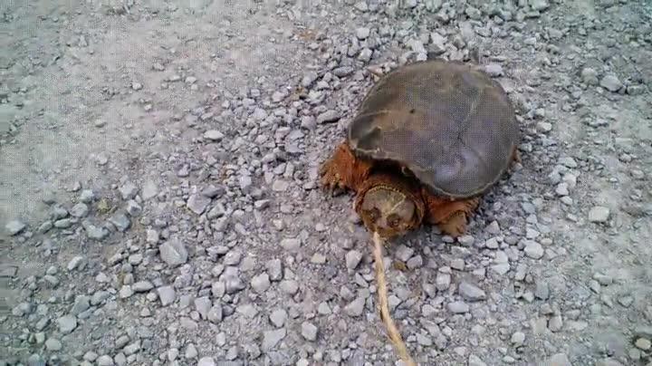 Enlace a Por este motivo NUNCA debes molestar a una tortuga