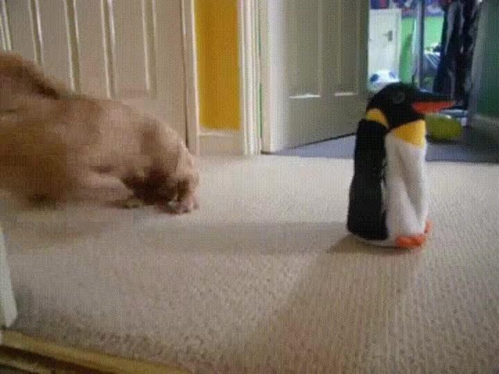 Enlace a Perro apasionado con el nuevo juguete que ha entrado en casa