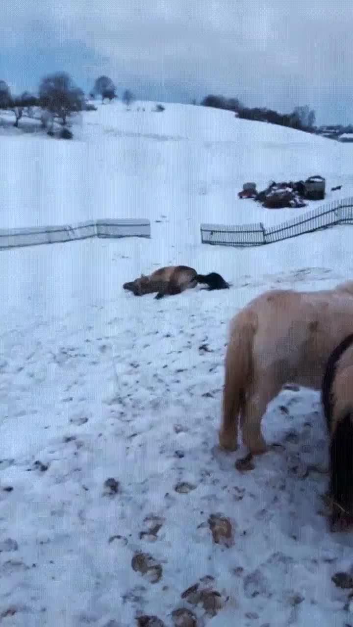 Enlace a Caballo disfrutando al máximo de un día de nieve