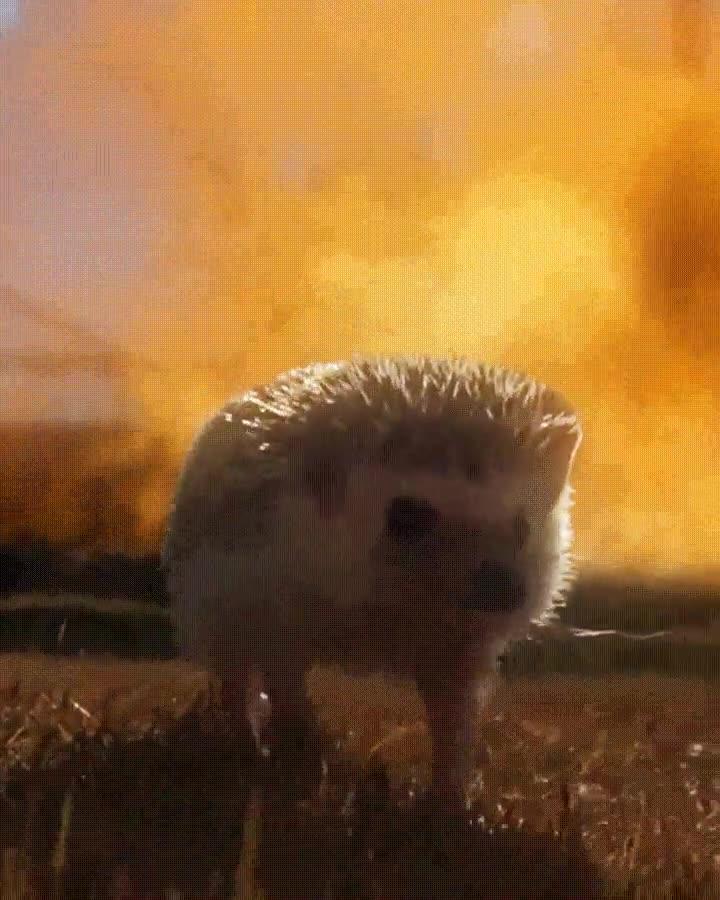 Enlace a Los erizos molones no miran a las explosiones