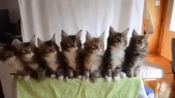 Enlace a Reacción de 7 gatos viendo un partido de tenis desde la banda