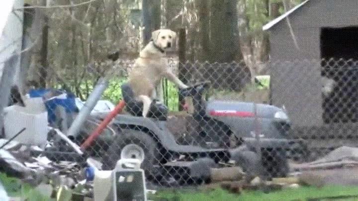 Enlace a Interrumpimos la emisión para enseñarles al perro más humano del mundo