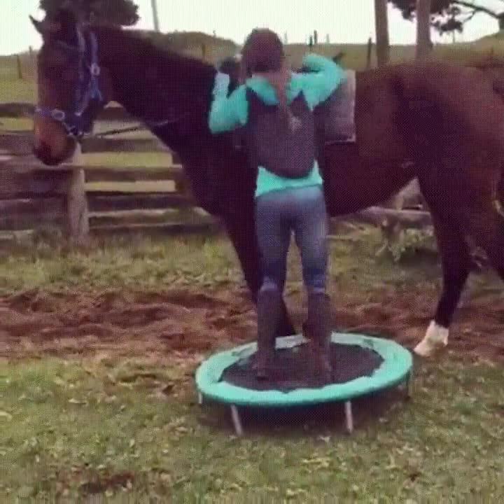Enlace a El truco de la gente bajita para montar a caballo