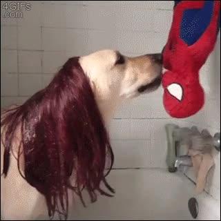 Enlace a Perros que han visto demasiadas veces las películas de Spiderman