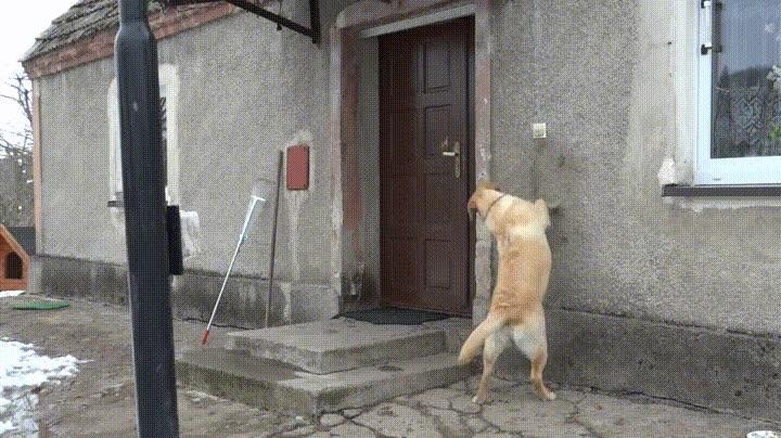 Enlace a Perros educados que llaman al timbre de casa para que les abras la puerta