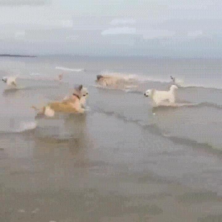 Enlace a Se nota cuál de estos perros visita la playa por primera vez en su vida