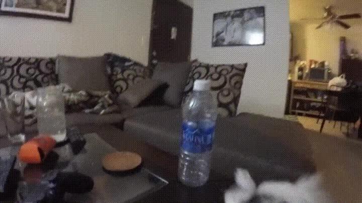 Enlace a Lo único que necesita este perro para ser feliz es una botella de agua