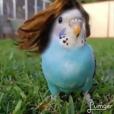 Enlace a Pájaros con un mejor pelazo del que tendrás nunca