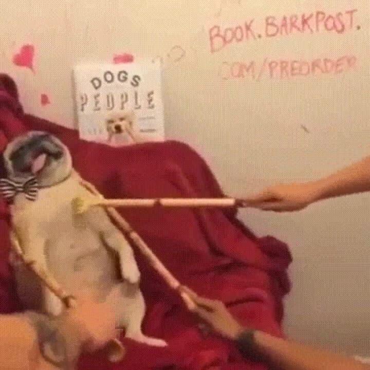 Enlace a Si la reencarnación es posible quiero ser este perro