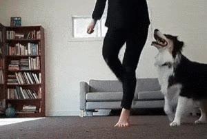 Enlace a ¿Quién dice que los perros no pueden bailar?