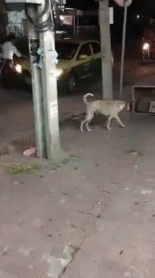 Enlace a Perros cada vez más espabilados