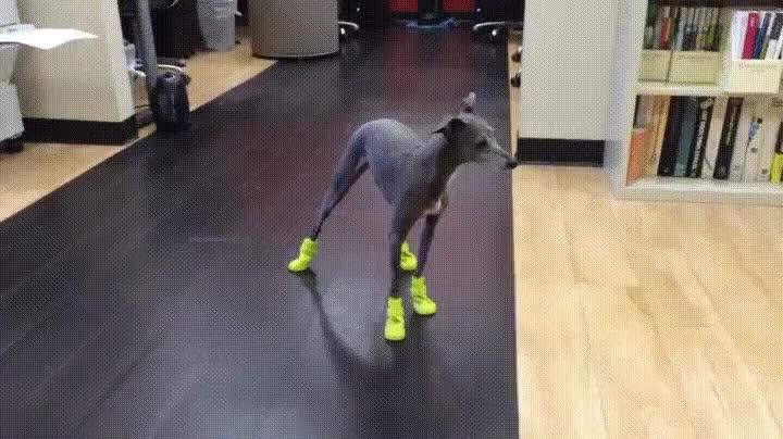 Enlace a Perros y calcetines no suele ser una buena combinación