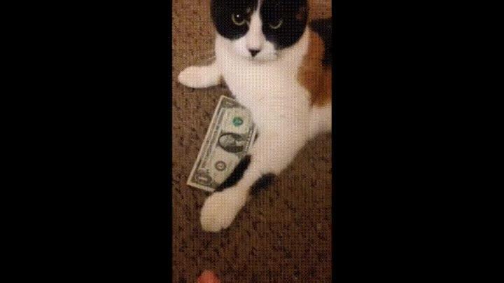 Enlace a Cuando le pides a tu madre dinero para salir con los amigos