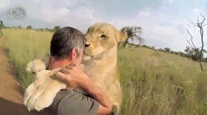 Enlace a Cuando tu leona decide darte un beso de película