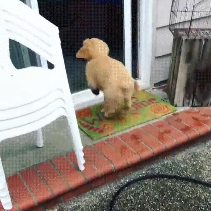 Enlace a Lo que pasa cuando tu perro no sabe distinguir si la puerta de casa está abierta o cerrada