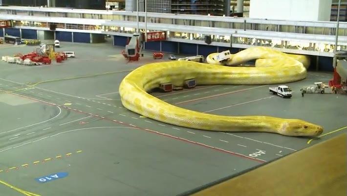 Enlace a Atascos en el aeropuerto por culpa de una serpiente gigante