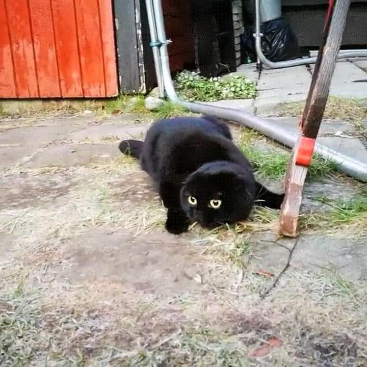 Enlace a Depredador felino haciendo gala de sus técnicas de caza