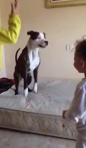 Enlace a Niños enseñando a un perro lo divertido que es saltar sobre un colchón