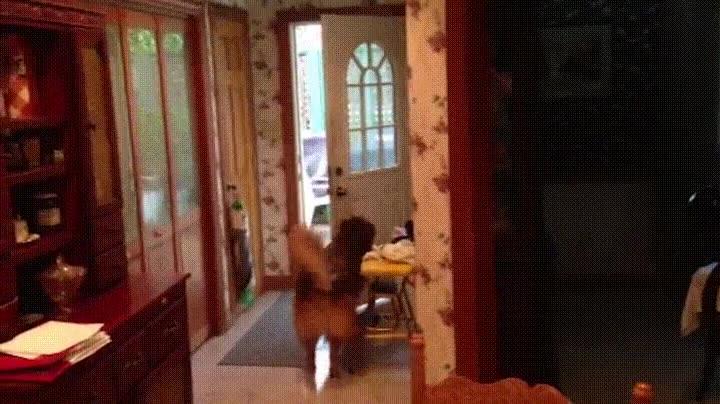 Enlace a Perros que han aprendido que la puerta de casa tiene que estar siempre cerrada