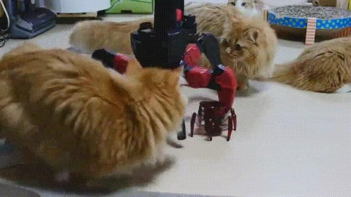 Enlace a Madre robot protegiendo a su hijo de las garras de un gato