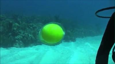 Enlace a Huevo sin cascara dentro del mar