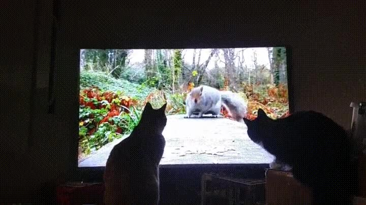 Enlace a Gatos alucinando con este vídeo de naturaleza