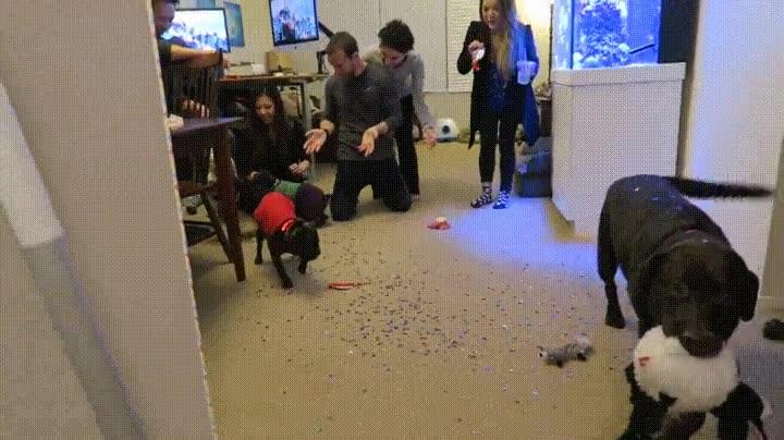 Enlace a La reacción de tu perro cuando le preparas una fiesta sorpresa para su cumpleaños