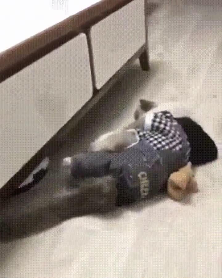 Enlace a Este gato me representa en la vida