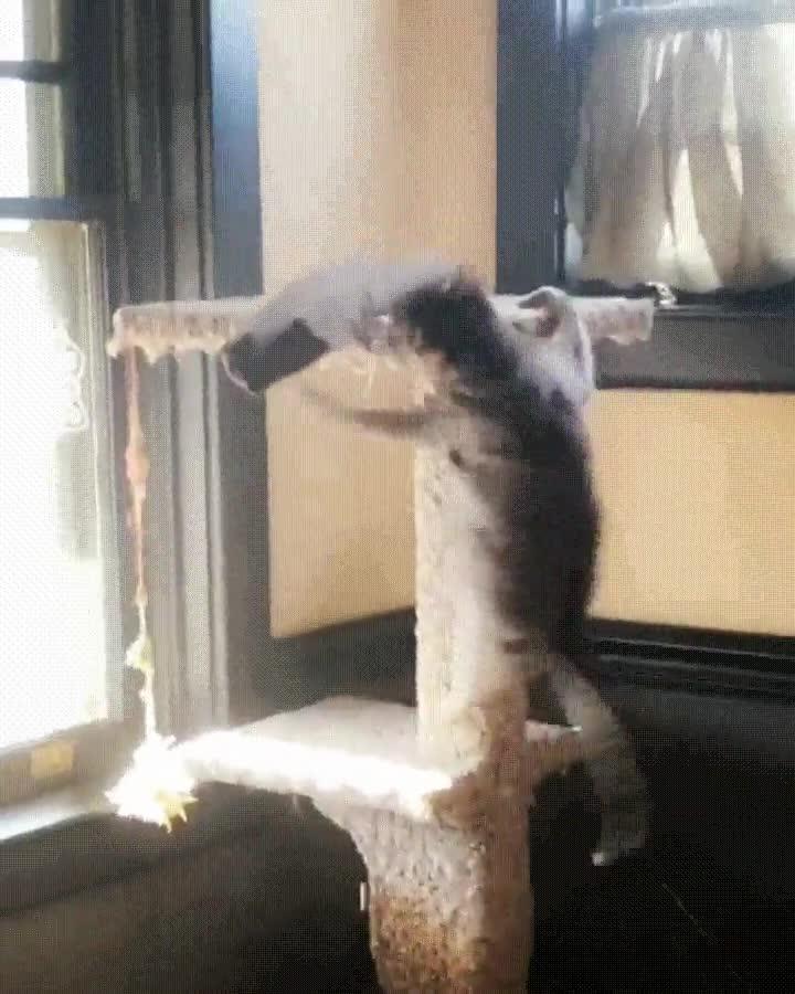 Enlace a Creo que mi gato es demadiado territorial...