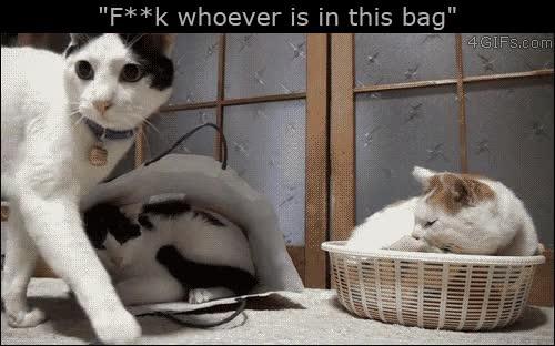 Enlace a Gatos con bastante mala leche...Menudo carácter