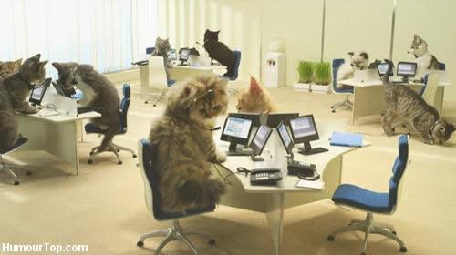 Enlace a Un dia cualquiera en la oficina