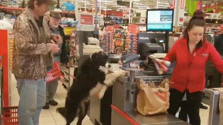 Enlace a Perros tan educados que se encargan de pagar ellos mismos la compra
