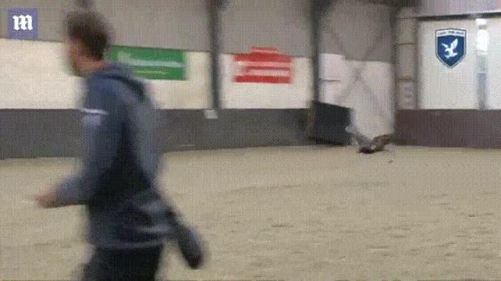 Enlace a La policía francesa está entrenando águilas para derribar drones