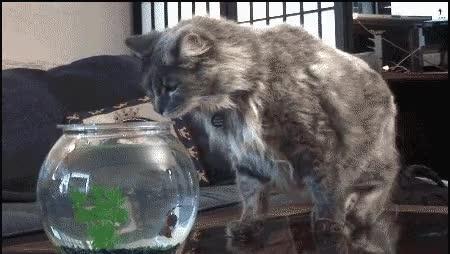 Enlace a La venganza de los peces contra esos gatos tan entrometidos