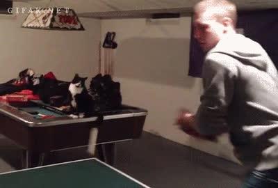 Enlace a Celebrando con mi gato cada punto del partido
