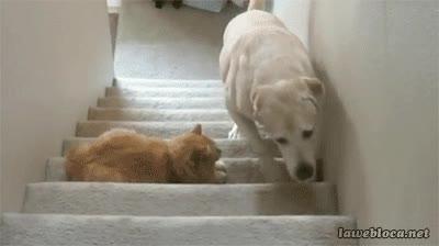 Enlace a No despiertes al gato. No despiertes al g...OH NO