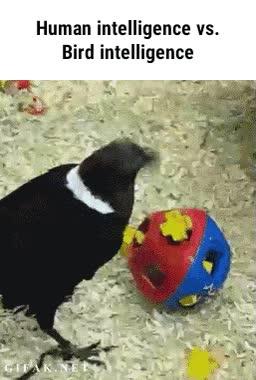 Enlace a Comprobado, los pájaros son más inteligentes que nosotros cuando somos pequeños