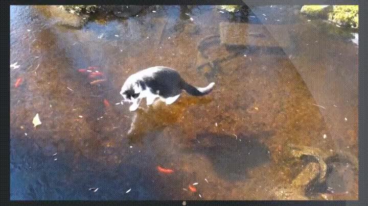 Enlace a Gato cazando sobre hielo. Tan cerca y tan lejos