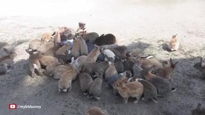 Enlace a Enterrado por una horda de conejos