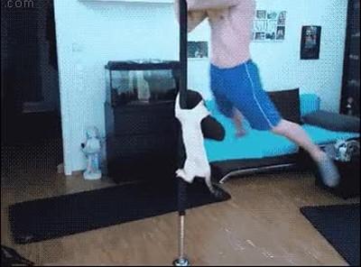 Enlace a Gatos que siempre imitan lo que hacen sus dueños