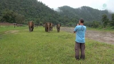 Enlace a Elefantes demasiado encariñados con su humano