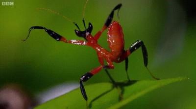 Enlace a Mantis religiosa intimidando a una araña con sus técnicas de Kung Fu