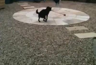 Enlace a Con la inestimable ayuda de su perro conseguirá ser el mejor saltador del mundo