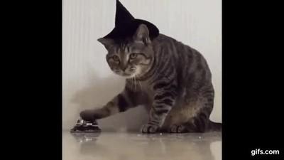 Enlace a Mi gato tiene una forma muy curiosa de pedirme las cosas