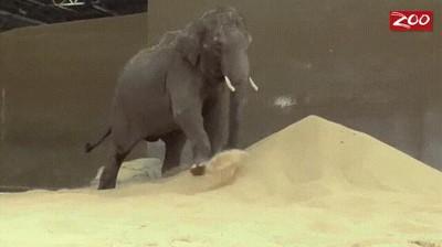 Enlace a Un elefante no necesita más que una montaña de arena para pasárselo en grande