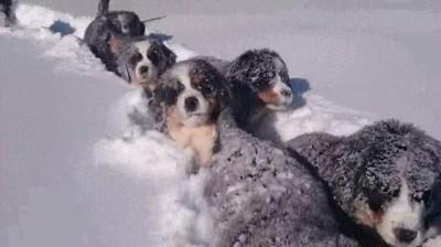 Enlace a Cachorros en la nieve pasándoselo en grande