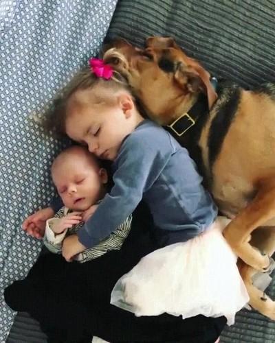 Enlace a Los tres pequeños de la casa durmiendo plácidamente